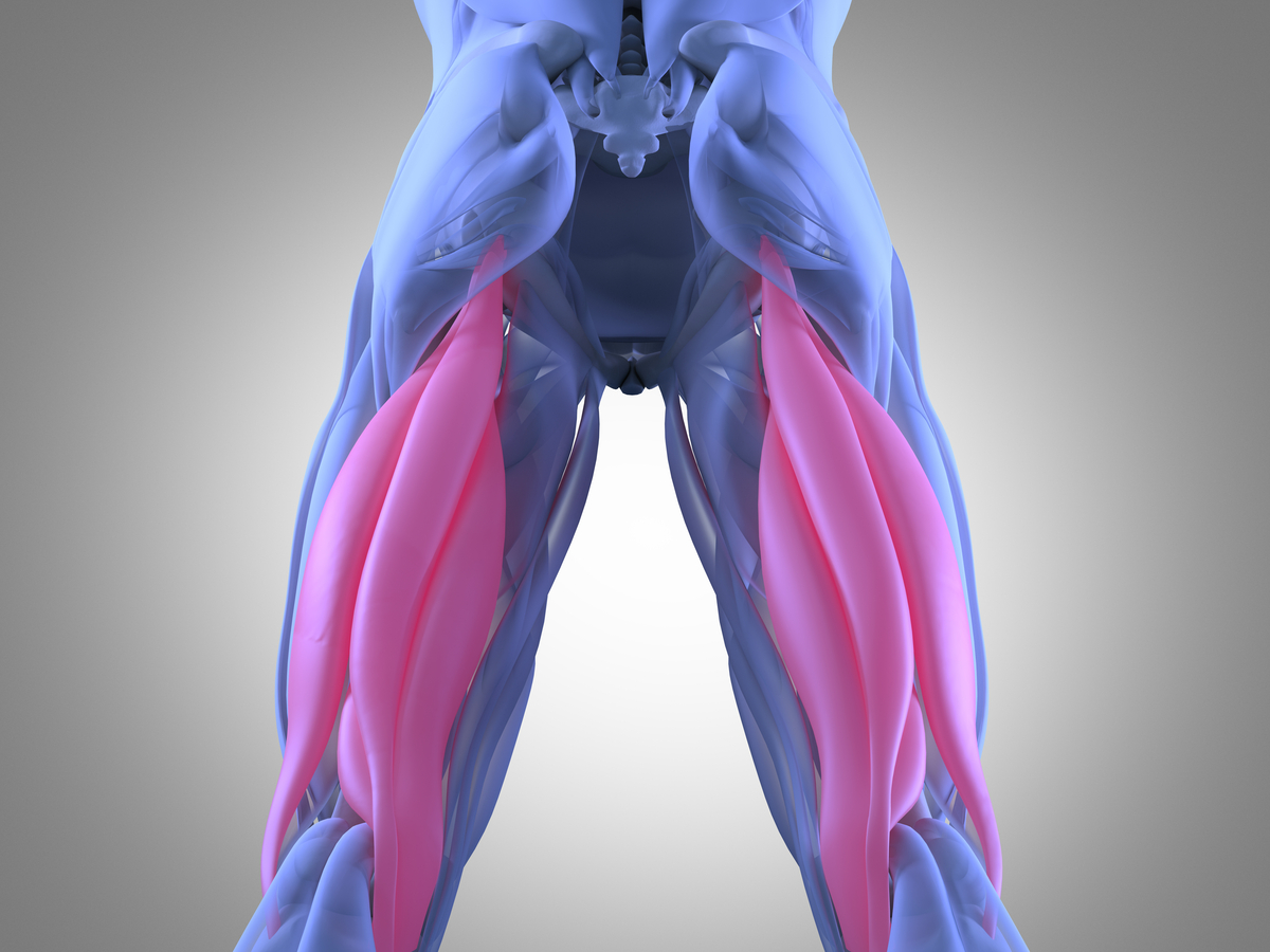 Hamstrings The Stonic Clinic