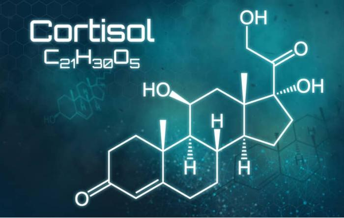 Cortisol-Stress-Induced-Muscle-Atrophy