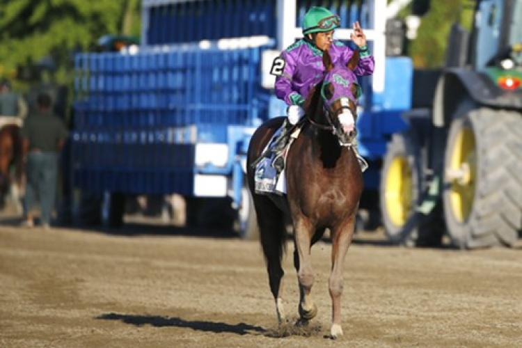 If horses could dream, could Chrome have won Triple Crown?